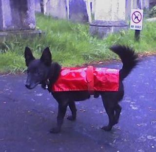 Iggy_raincoat